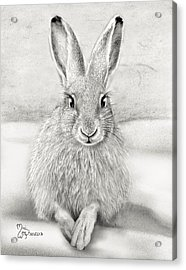 March Hare Acrylic Print by Miki Krenelka