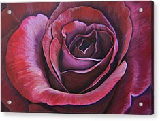March Rose Acrylic Print by Thu Nguyen