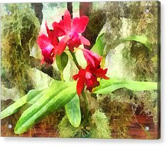 Maroon Cattleya Orchids Acrylic Print by Susan Savad
