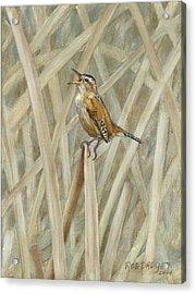 Marsh Melody Acrylic Print by Rob Dreyer AFC