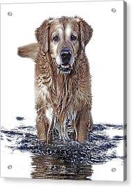Master Of Wet Elements Acrylic Print by Joachim G Pinkawa