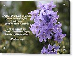 Matthew 6 Verses 28 And 29 Acrylic Print by Vicki Maheu