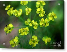 May Explosion Acrylic Print by Neal  Eslinger