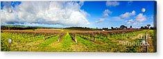 Mclaren Flat Vineyards  Acrylic Print by Bill  Robinson