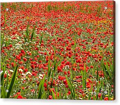 Meadow Covered With Red Poppies Acrylic Print by Jose Elias - Sofia Pereira
