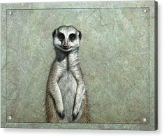 Meerkat Acrylic Print by James W Johnson