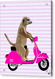 Meerkat On A Pink Moped Acrylic Print by Kelly McLaughlan