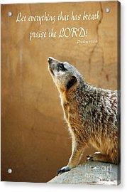 Meerkat Praise Acrylic Print by Methune Hively