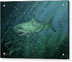 Megadolon Shark Acrylic Print by Tom Shropshire