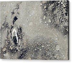 Melting Arctic Sea Ice Acrylic Print by Nasa Earth Observatory