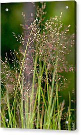 Memories Of Springtime Acrylic Print by Holly Kempe