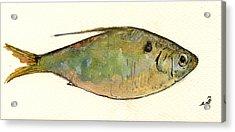 Menhaden Fish Acrylic Print by Juan  Bosco