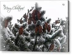 Merry Christmas Pinecones Acrylic Print by Michelle Frizzell-Thompson