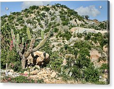 Mexican Desert Landscape Acrylic Print by Linda Phelps