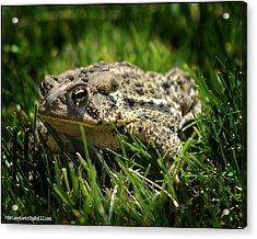 Michigan Toad In The Wild Acrylic Print by LeeAnn McLaneGoetz McLaneGoetzStudioLLCcom