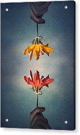 Middle Ground Acrylic Print by Tara Turner