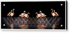 Midnight Tango Acrylic Print by Ernestine Manowarda