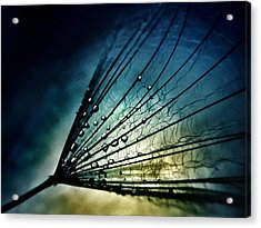 Midnight Tears Acrylic Print by Marianna Mills