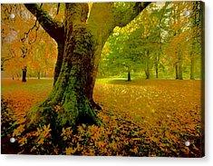 Autumn Splendor Acrylic Print by Bonnie Bruno