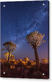 Milky Way Over Quiver Trees - Namibia Night Photograph Acrylic Print by Duane Miller