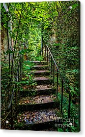 Mind Your Step Acrylic Print by Adrian Evans