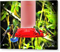 Mindo Hummer Gathering Acrylic Print by Al Bourassa