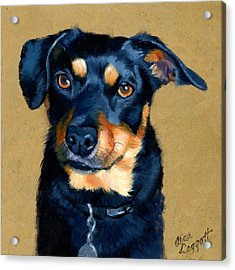 Miniature Pinscher Dog Painting Acrylic Print by Alice Leggett