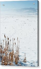 Minimalist Cattail Prairie In Colorado Acrylic Print by Julie Magers Soulen