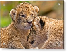 Minor Collision Acrylic Print by Ashley Vincent