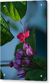 Miracle Vine Acrylic Print by Joseph Yarbrough