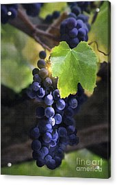 Mission Grapes II Acrylic Print by Sharon Foster