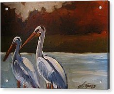 Missouri River Pelicans Acrylic Print by Suzanne Tynes