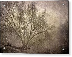 Mist Tree Acrylic Print by Guido Montanes Castillo