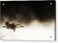 Misty Flight Acrylic Print by Tim Gainey