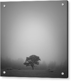 Misty Morning Acrylic Print by Patrick Downey