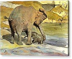 Mom And Cub Elephants Having A Bath Acrylic Print by Juan  Bosco