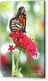 Monarch V Acrylic Print by Pamela Gail Torres