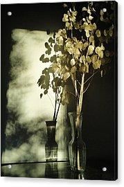 Money Plants Really Do Cast Shadows Acrylic Print by Guy Ricketts