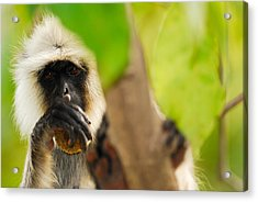 Monkey See Acrylic Print by Stefan Carpenter