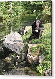 Monkey Thoughts Acrylic Print by Dreamland Media