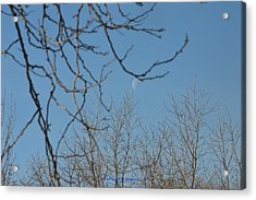 Moon On Treetop Acrylic Print by Sonali Gangane