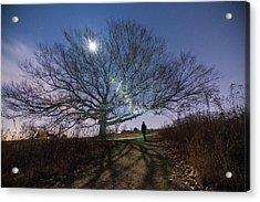 Moon Tree Acrylic Print by Kristopher Schoenleber