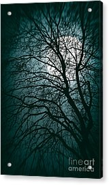 Moonlight Forest Acrylic Print by Carlos Caetano