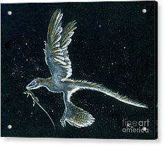 Moonlight Hunt - Microraptor Acrylic Print by Julius Csotonyi