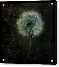 Moonlit Dandelion Acrylic Print by Gothicolors Donna