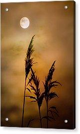 Moonlit Stalks Acrylic Print by Gary Heller