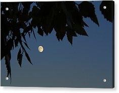 Moonrise Acrylic Print by Andrea Kappler