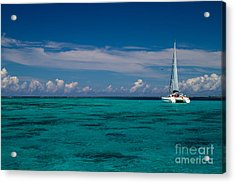 Moorea Lagoon No 16 Acrylic Print by David Smith