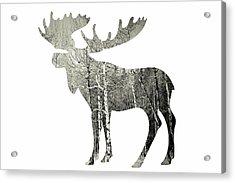 Moose Acrylic Print by Amber Berninger