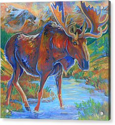 Moose Acrylic Print by Jenn Cunningham
